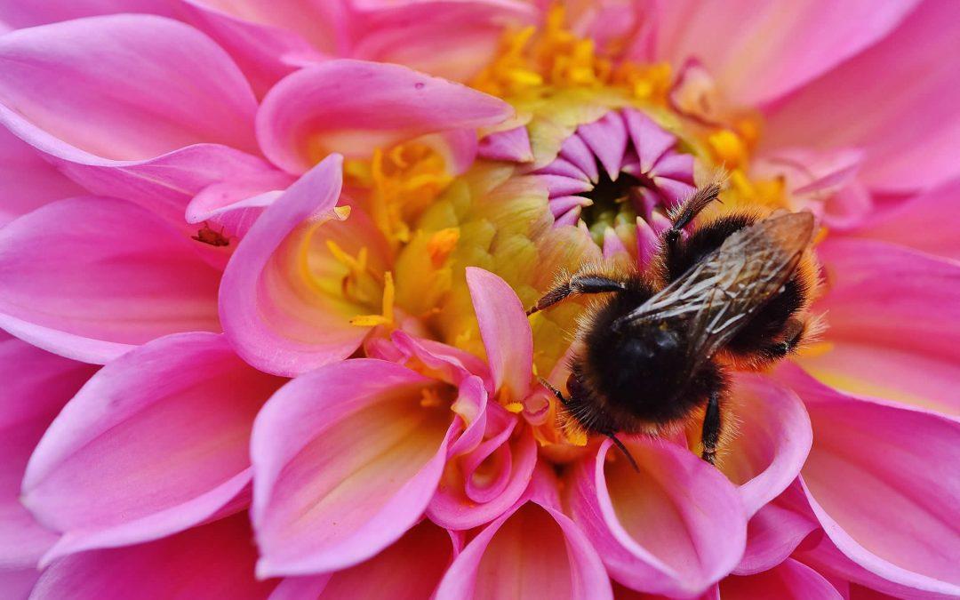 Bienensommer – Waldbronn blüht auf!