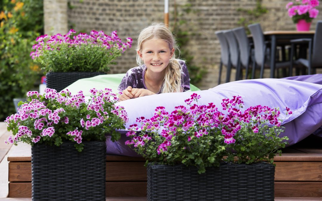 sommer im garten blumen kraft in waldbronn sch nes f r drinnen drau en. Black Bedroom Furniture Sets. Home Design Ideas
