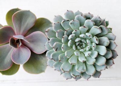 galerie-zimmerpflanzen-5