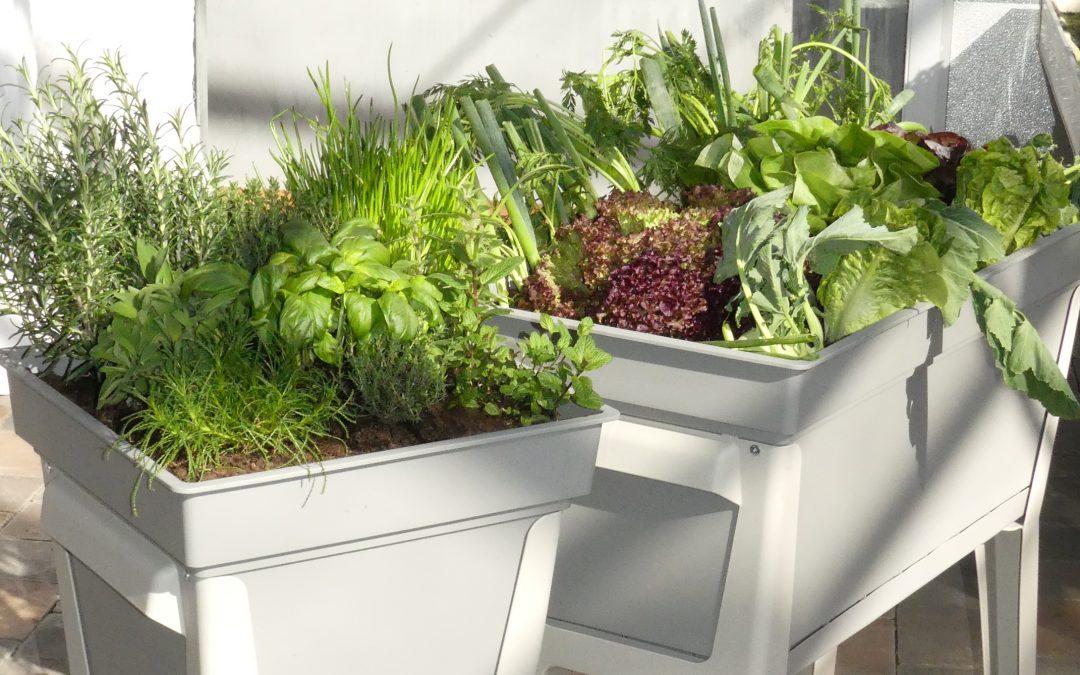 Urban Gardening mit dem OGV Reichenbach