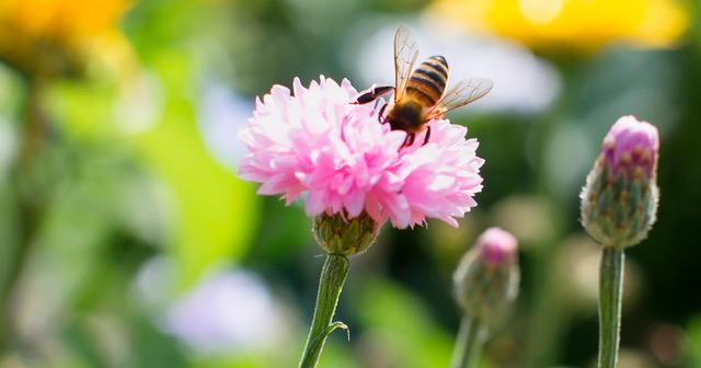Bienensommer